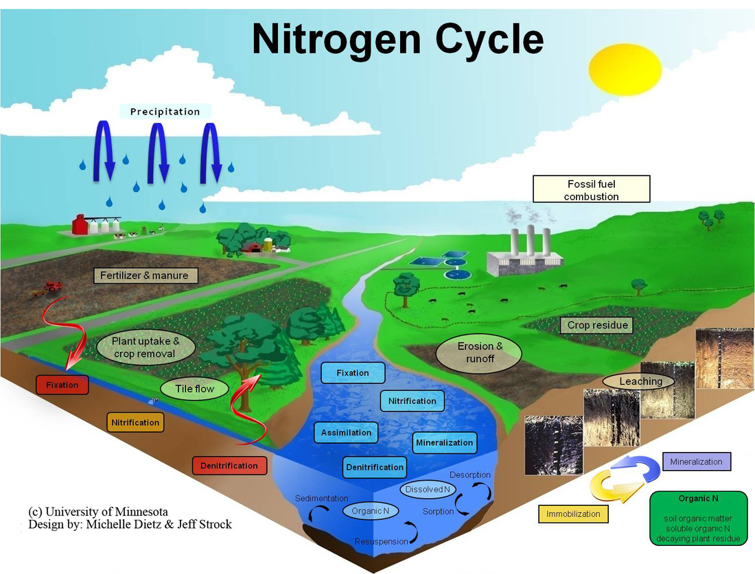 Biogeochemical cycle anyas biolit blog ccuart Choice Image